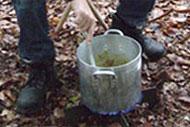 Soep in het Spanderswoud