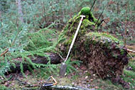 Lieren in het Spanderswoud